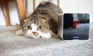 Камера Petcube появился в продаже в России